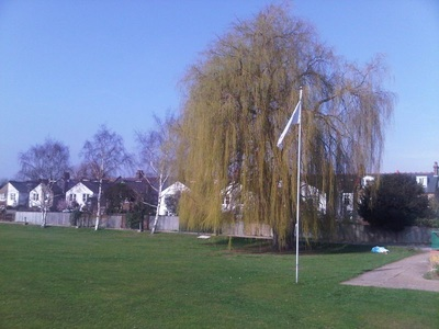 Weepping willow at Dulwich Sports Ground London